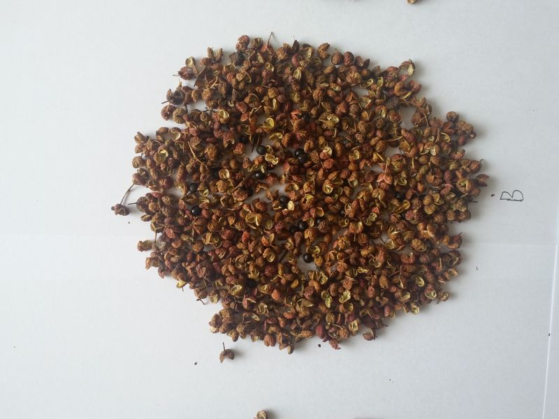 High quality Chinese szechuan pepper sichuan pepper