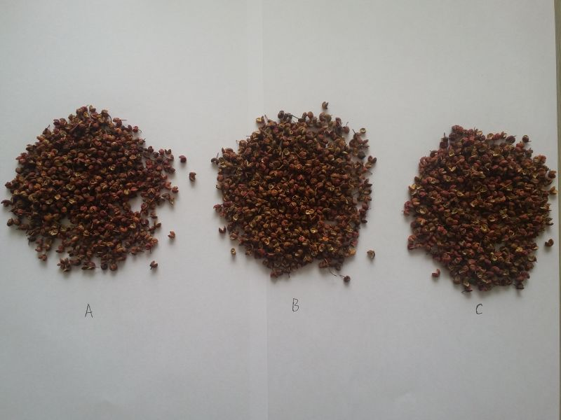 Chinese red Sichuan pepper
